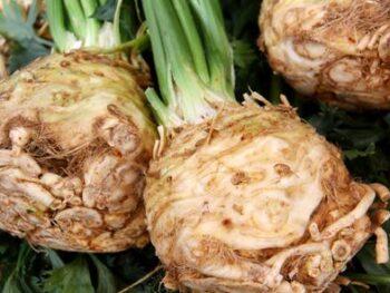 Celery_Root