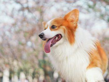 Female dog names