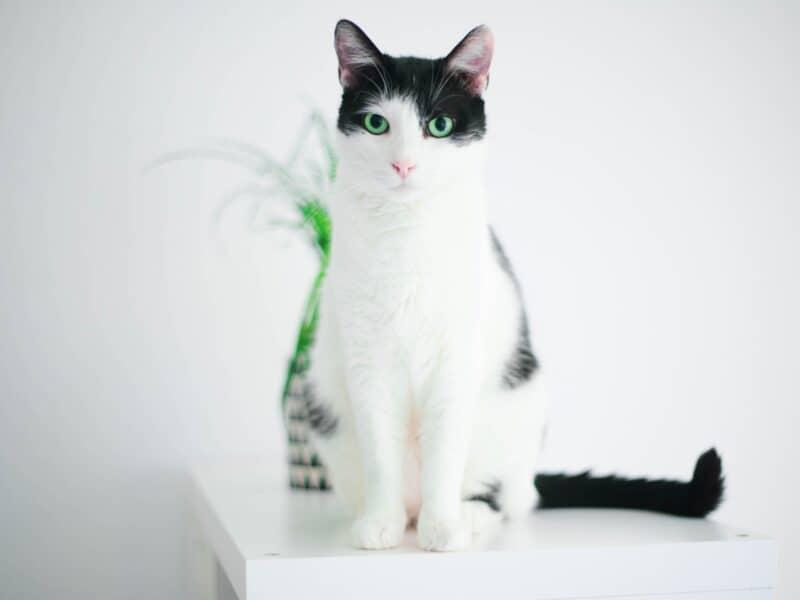 Male cat names