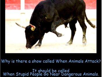 When-Stupid-People-Go-Near-Dangerous-Animals