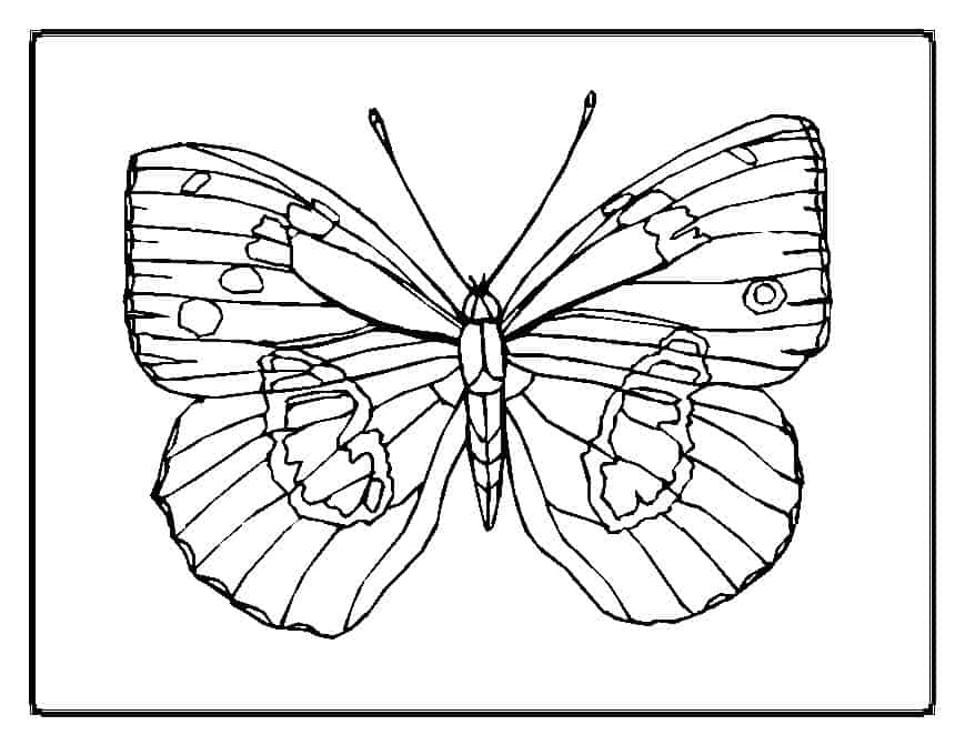 thora thinks coloring pages butterfly - photo#10