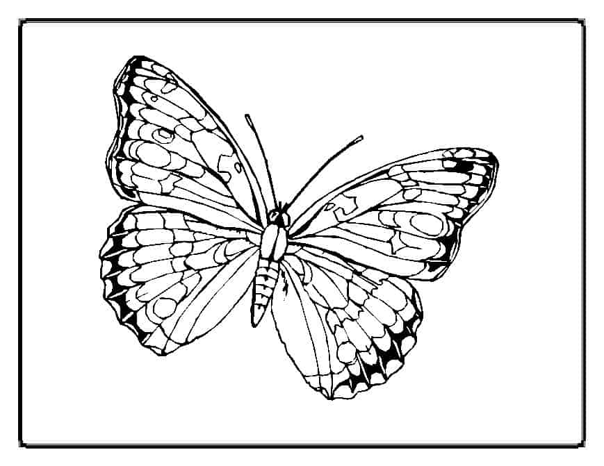 thora thinks coloring pages butterfly - photo#6