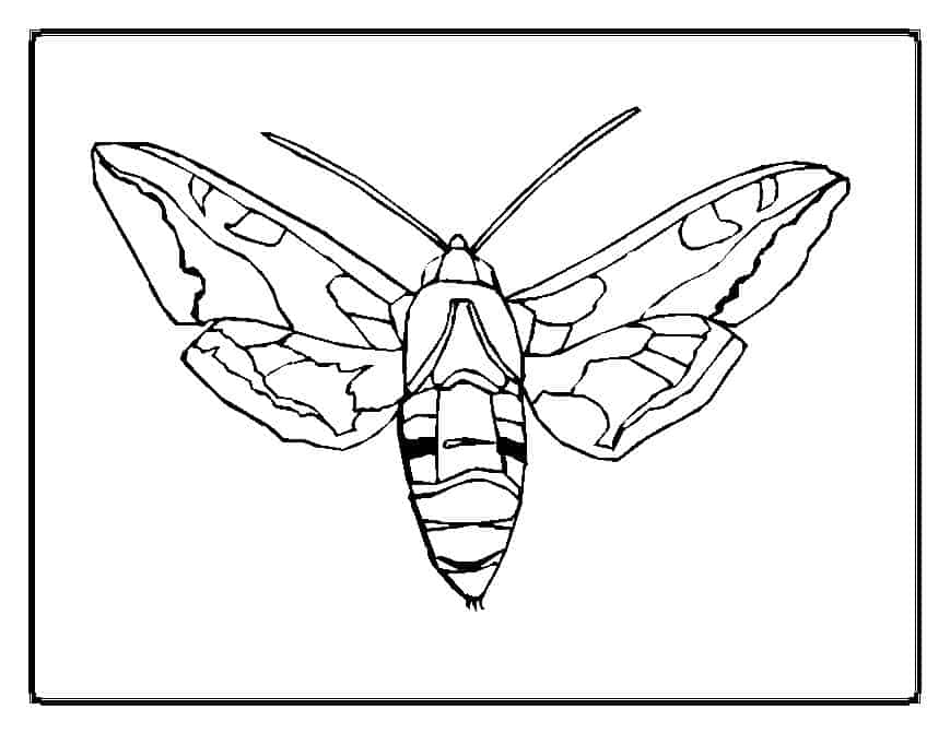thora thinks coloring pages butterfly - photo#9