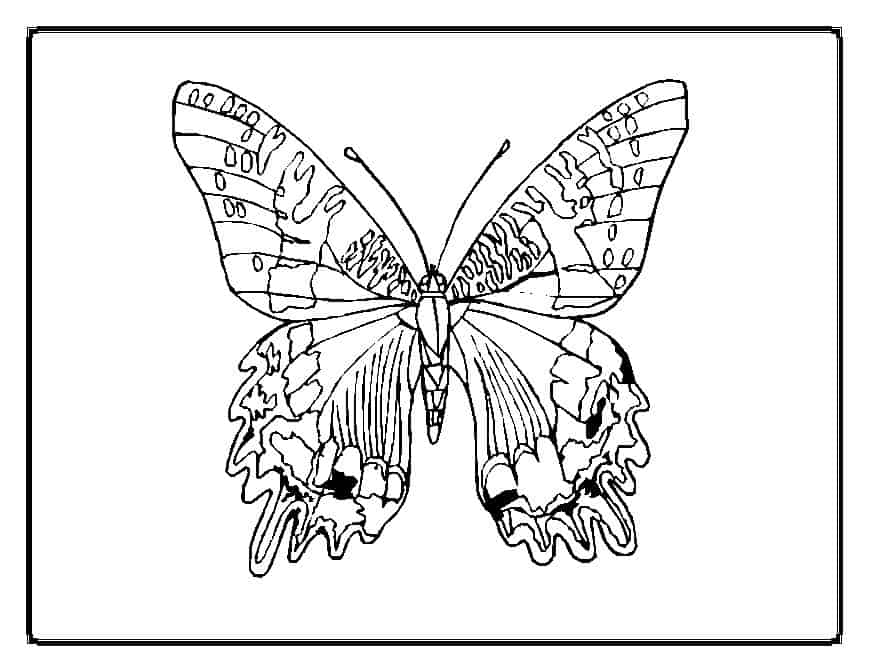 thora thinks coloring pages butterfly - photo#1