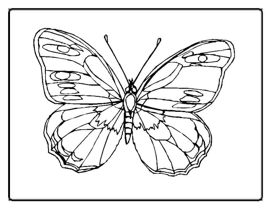 thora thinks coloring pages butterfly - photo#4