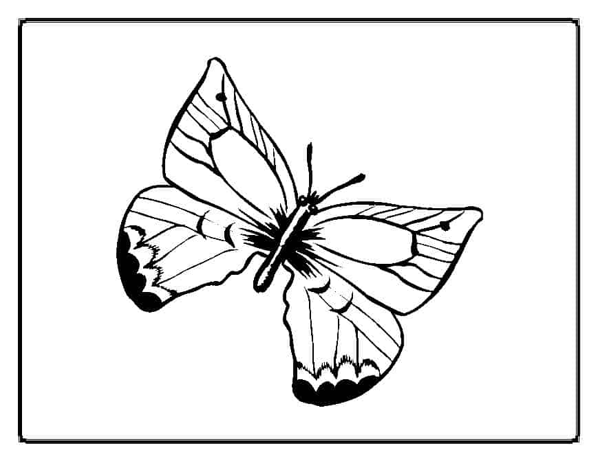 thora thinks coloring pages butterfly - photo#8