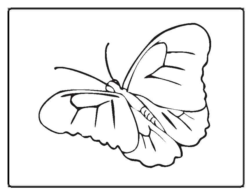 thora thinks coloring pages butterfly - photo#11