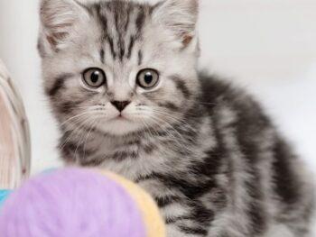 cat-names