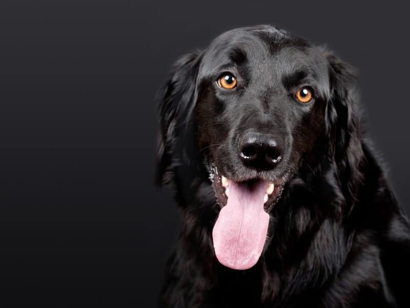 Great dog names by color: black dogs