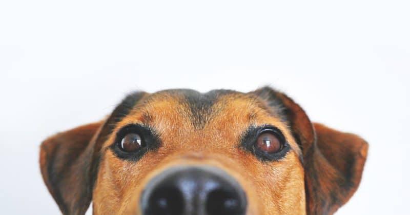 Great dog names by color: brown and tan pup peeking at camera