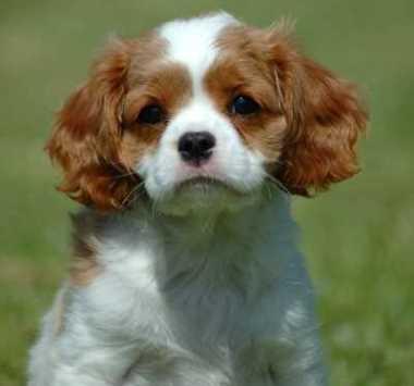 dog-names