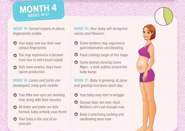 Pregnancy Month By Month Month 4