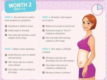 Pregnancy Information Guide